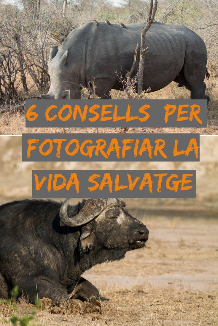 6 consells per fotografiar vida salvatge