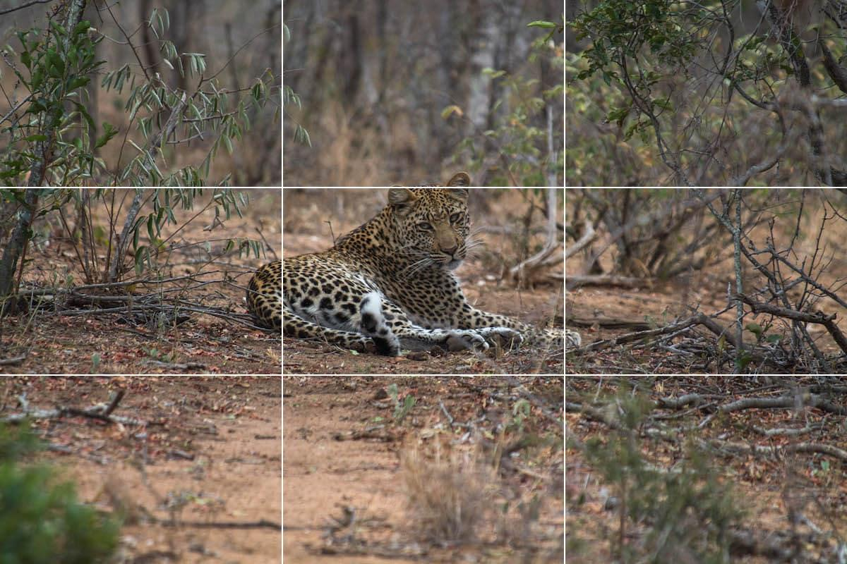 Rule of thirds: wildlife photography tips