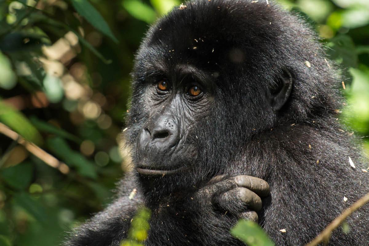 the perfect 10 day itinerary in Uganda and Rwanda