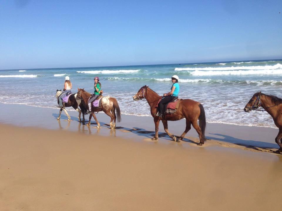 Ruta de dos dies amb cavall a Aireys Inlet