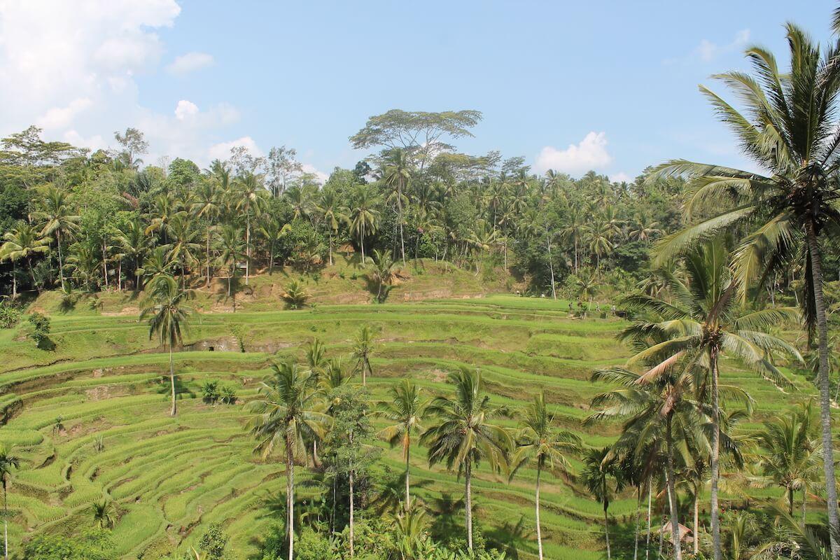 Vacances a Bali: punts destacats per veure