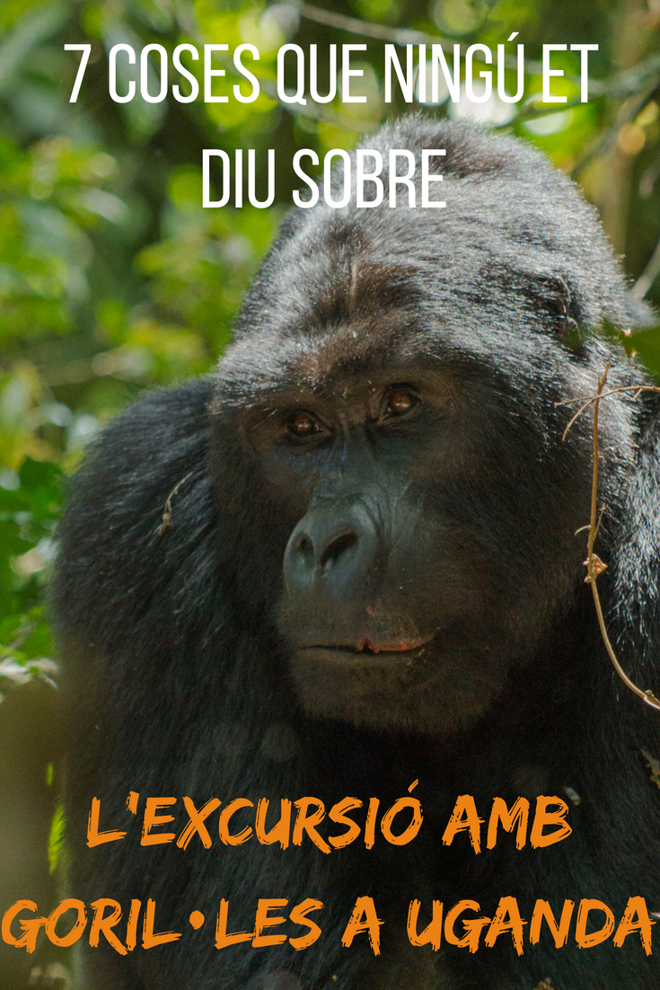 7 coses que ningú et diu sobre l'excursió amb goril·les a Uganda