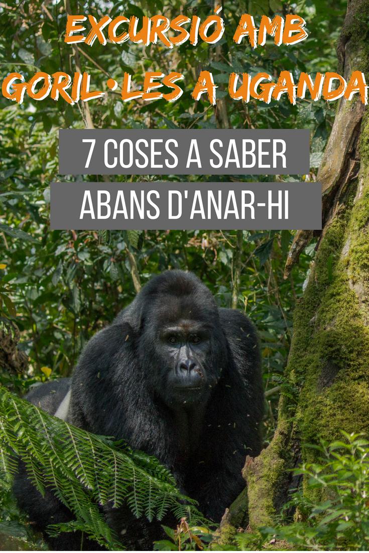 Excursió amb goril·les: 7 coses a saber abans d'anar-hi