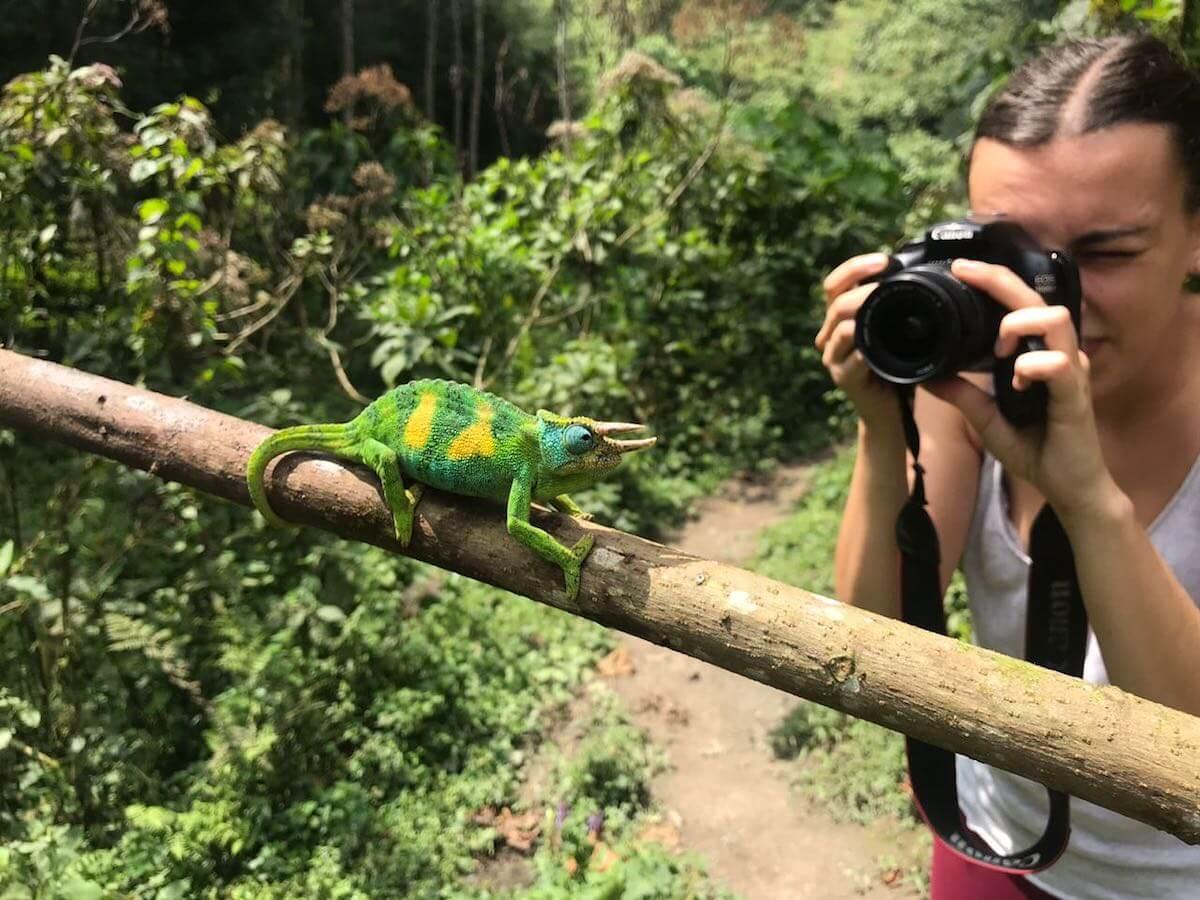 Buscant camaleons a la selva de Bwindi