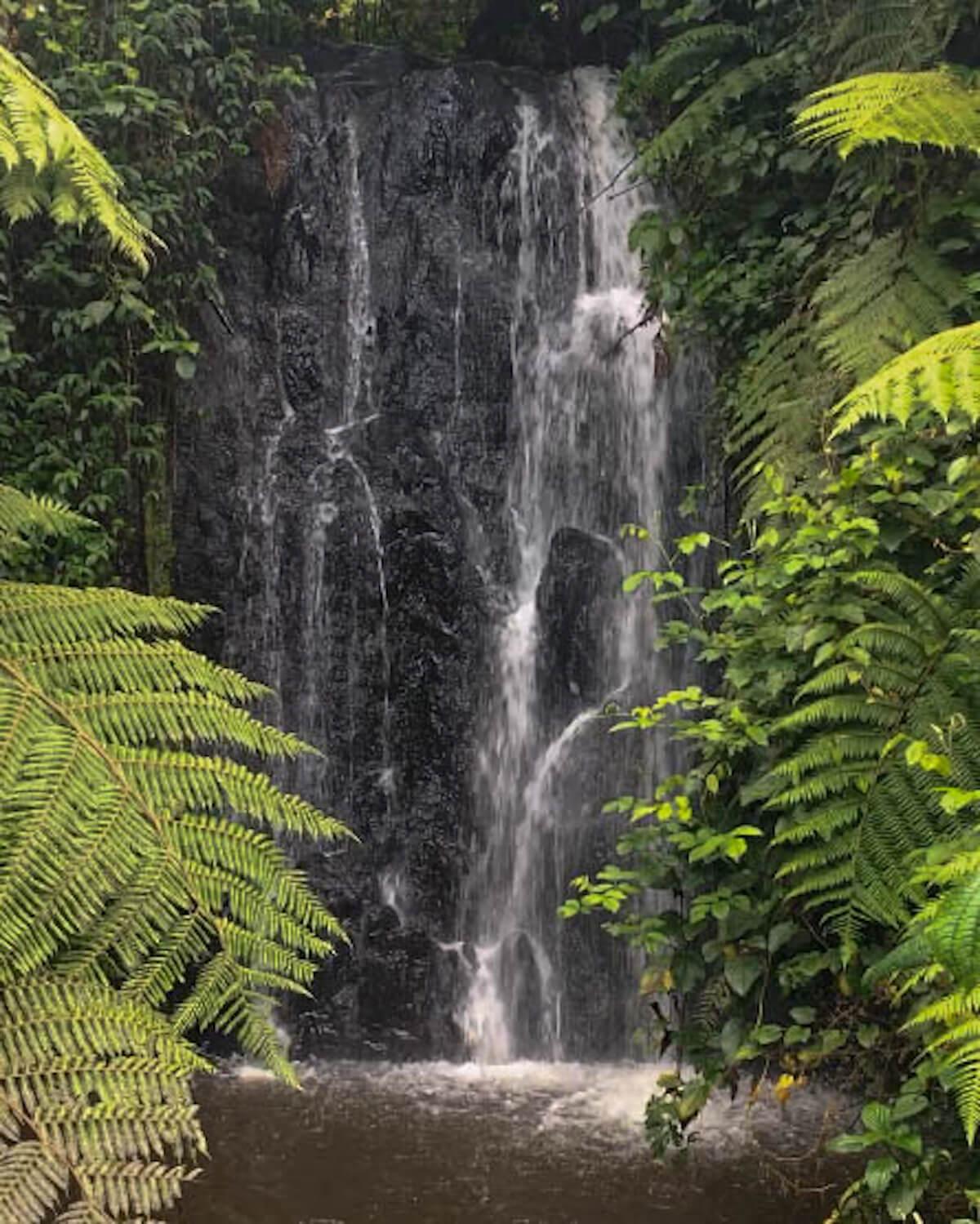 Bwindi excursió a una cascada