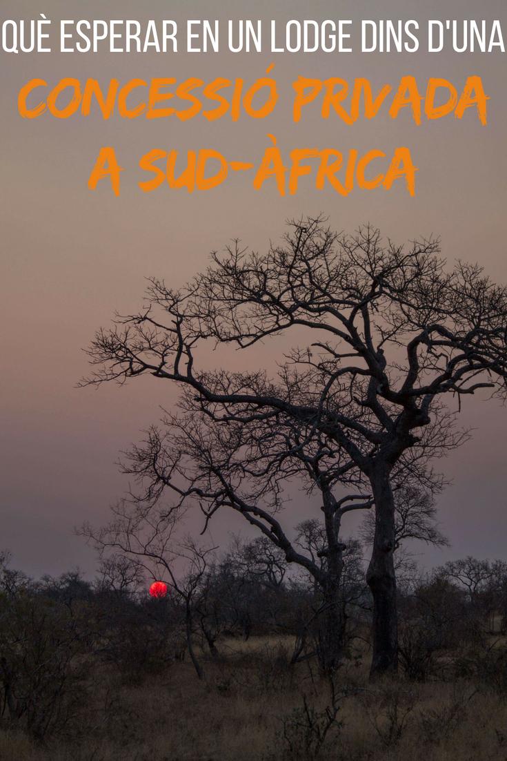 Què esperar en un lodge dins d'una concessió privada a Sud-Àfrica
