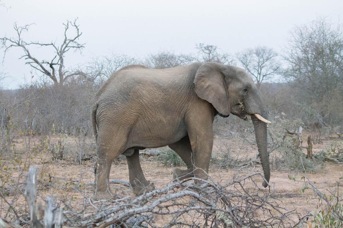Com fotografiar animals salvatges: 5 consells per a principiants
