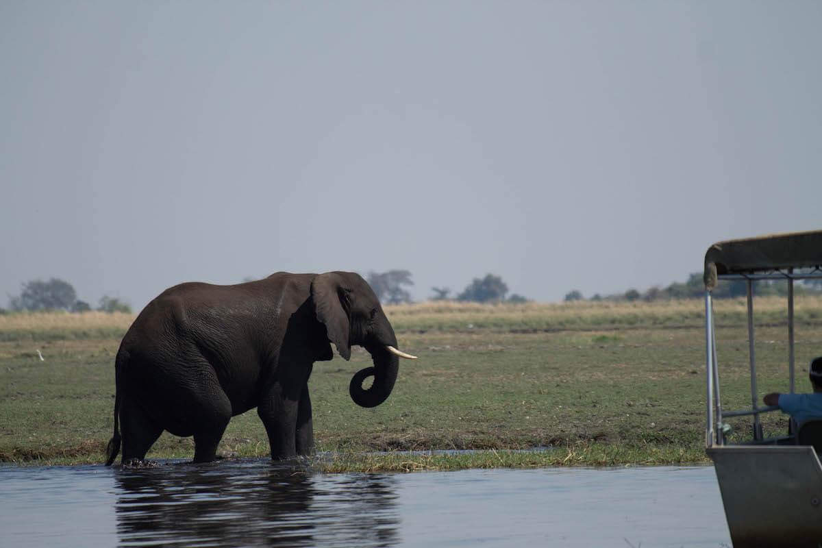 Excursió d'un dia a Chobe