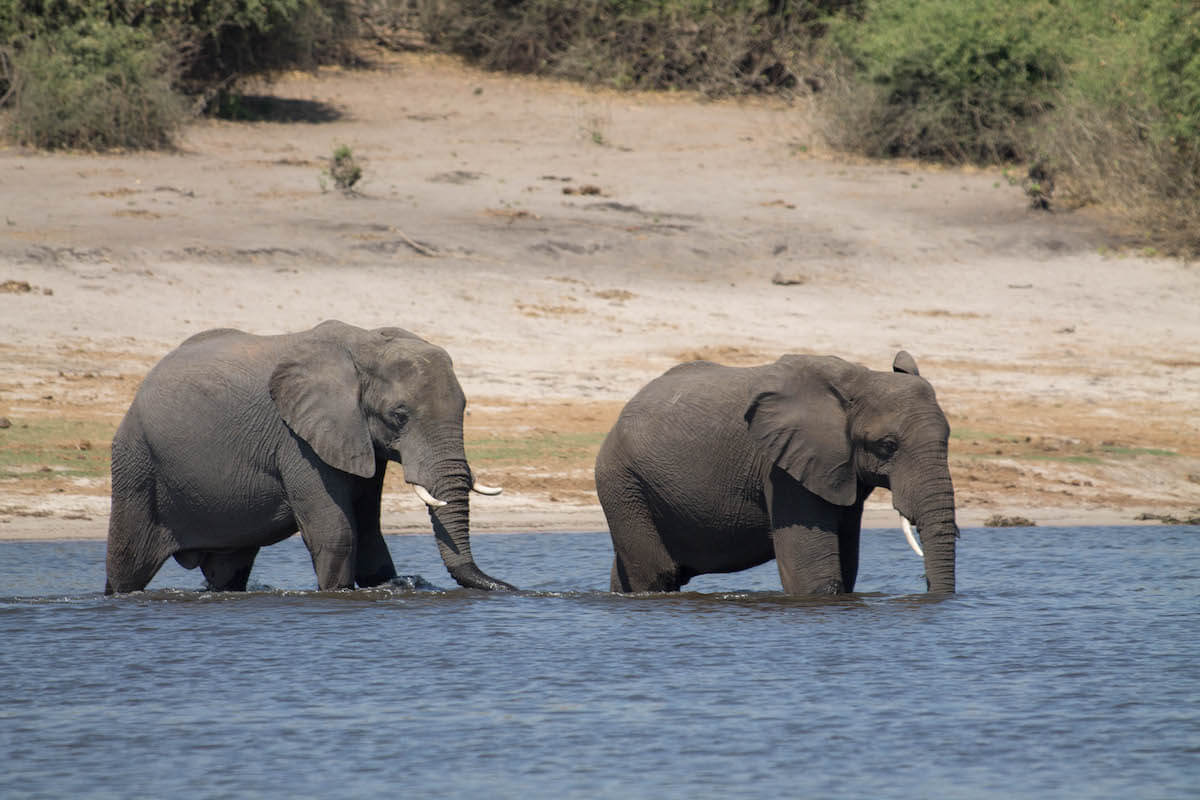 Excursió d'un dia a Chobe des de Victoria Falls: val la pena?