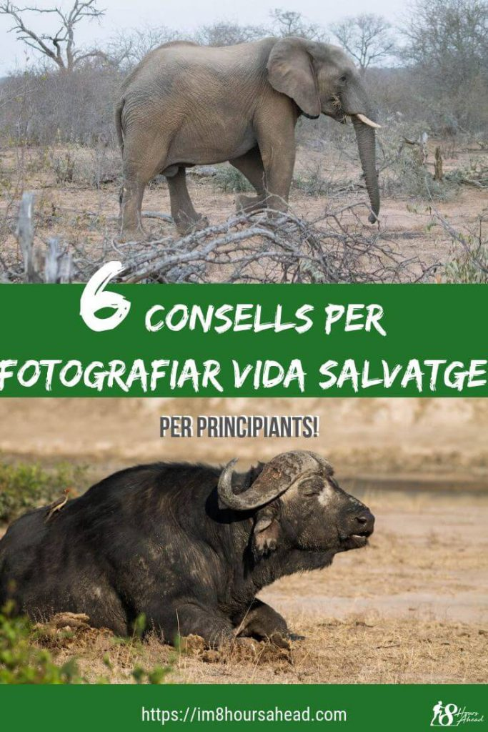 6 consells per fotografiar la vida salvatge