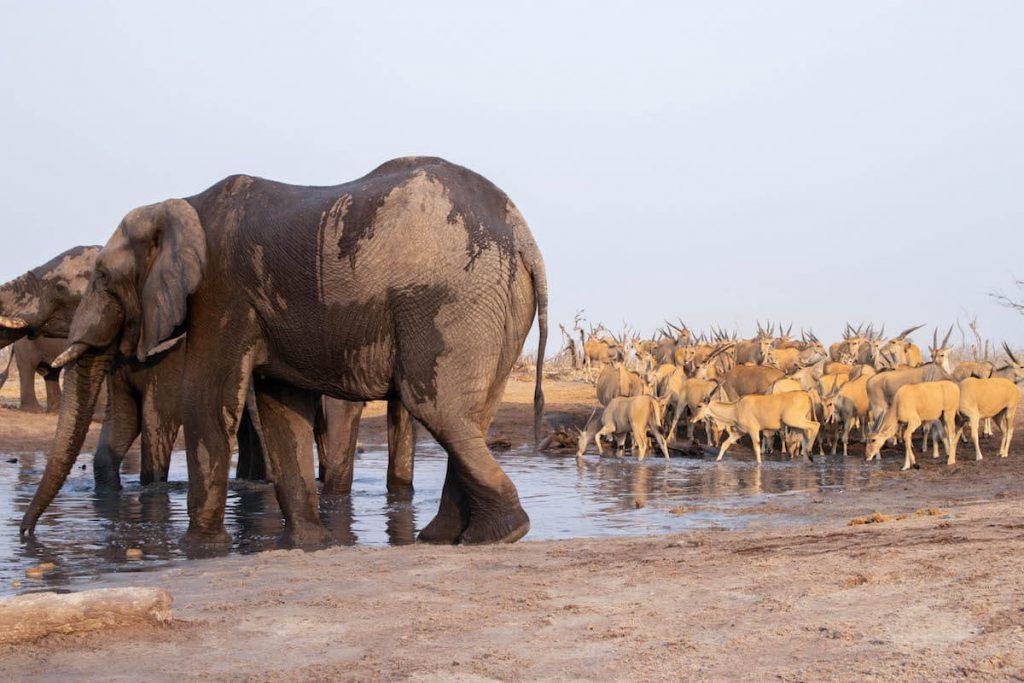 Elefants a la bassa