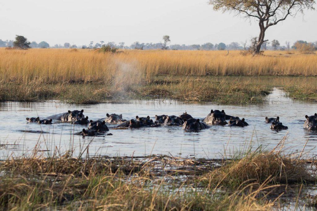 Bassa plena d'hipopòtams