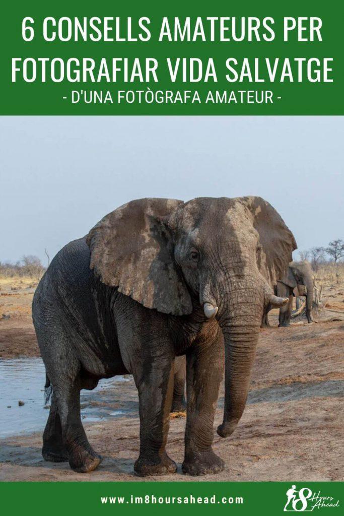6 consells amateurs per fotografiar vida salvatge