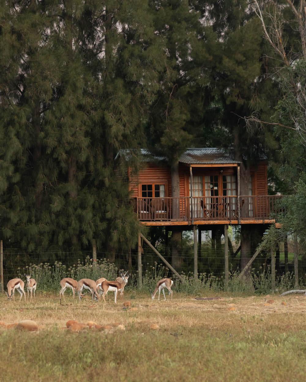 Dormint a una casa als arbres a Vindoux Guest Farm, Sud-Àfrica