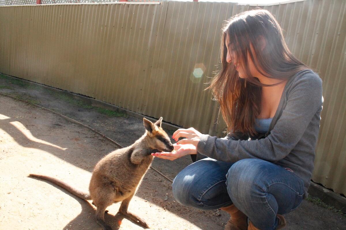 feeding animals in Maru Park