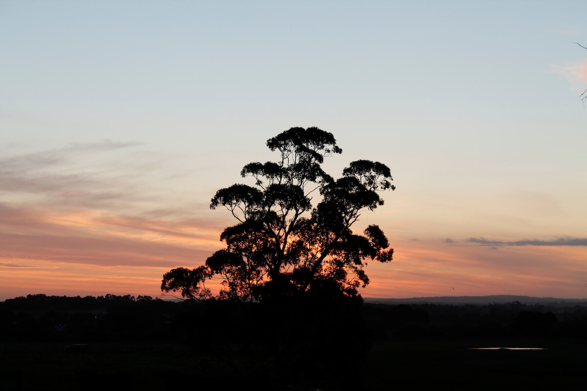 sunset from the paddocks