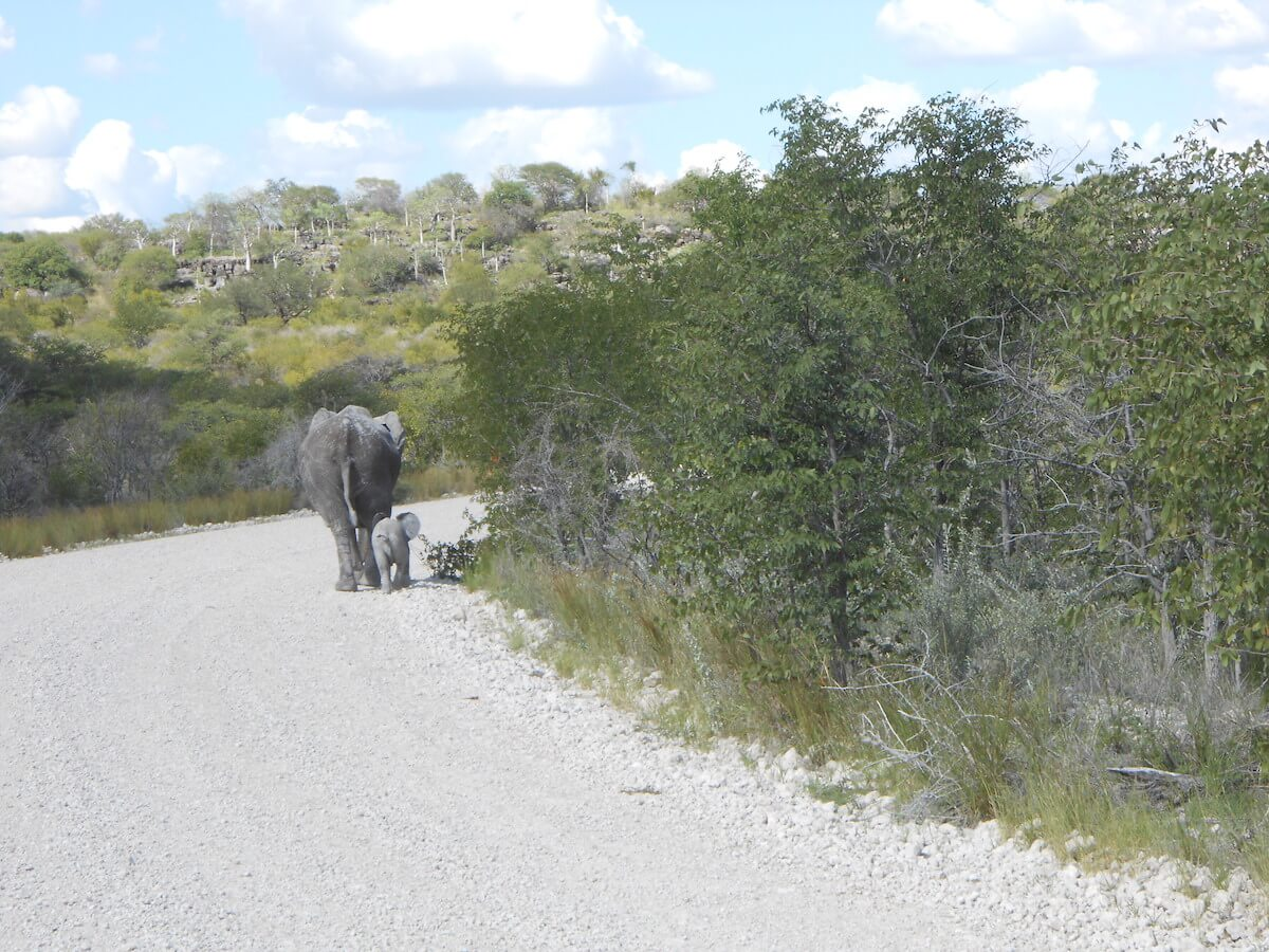 Namibia on a budget: Etosha National Park
