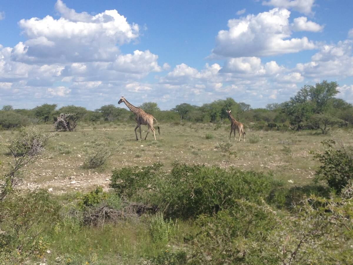 Elephants in Etosha National Park