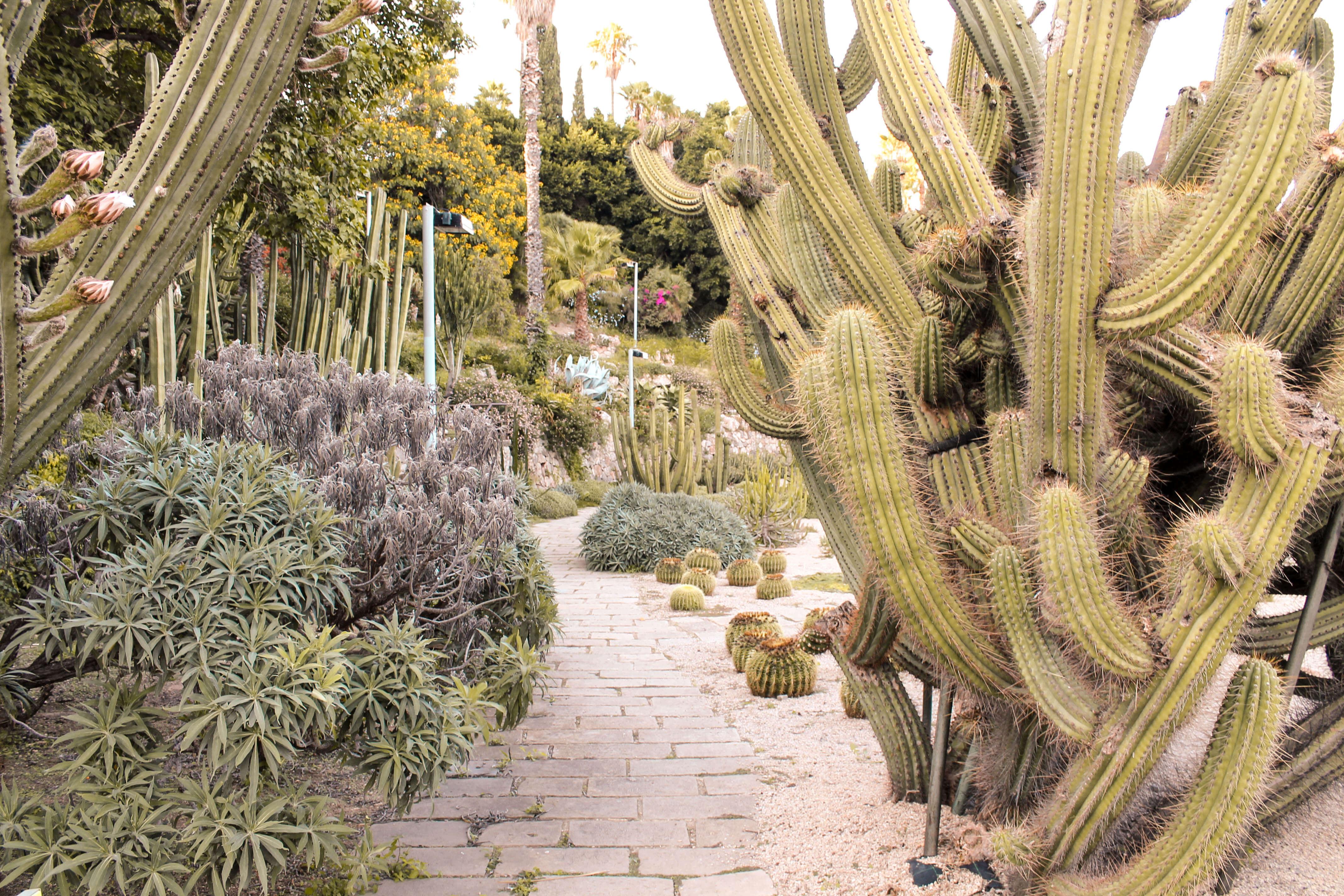 Cactus garden in Barcelona