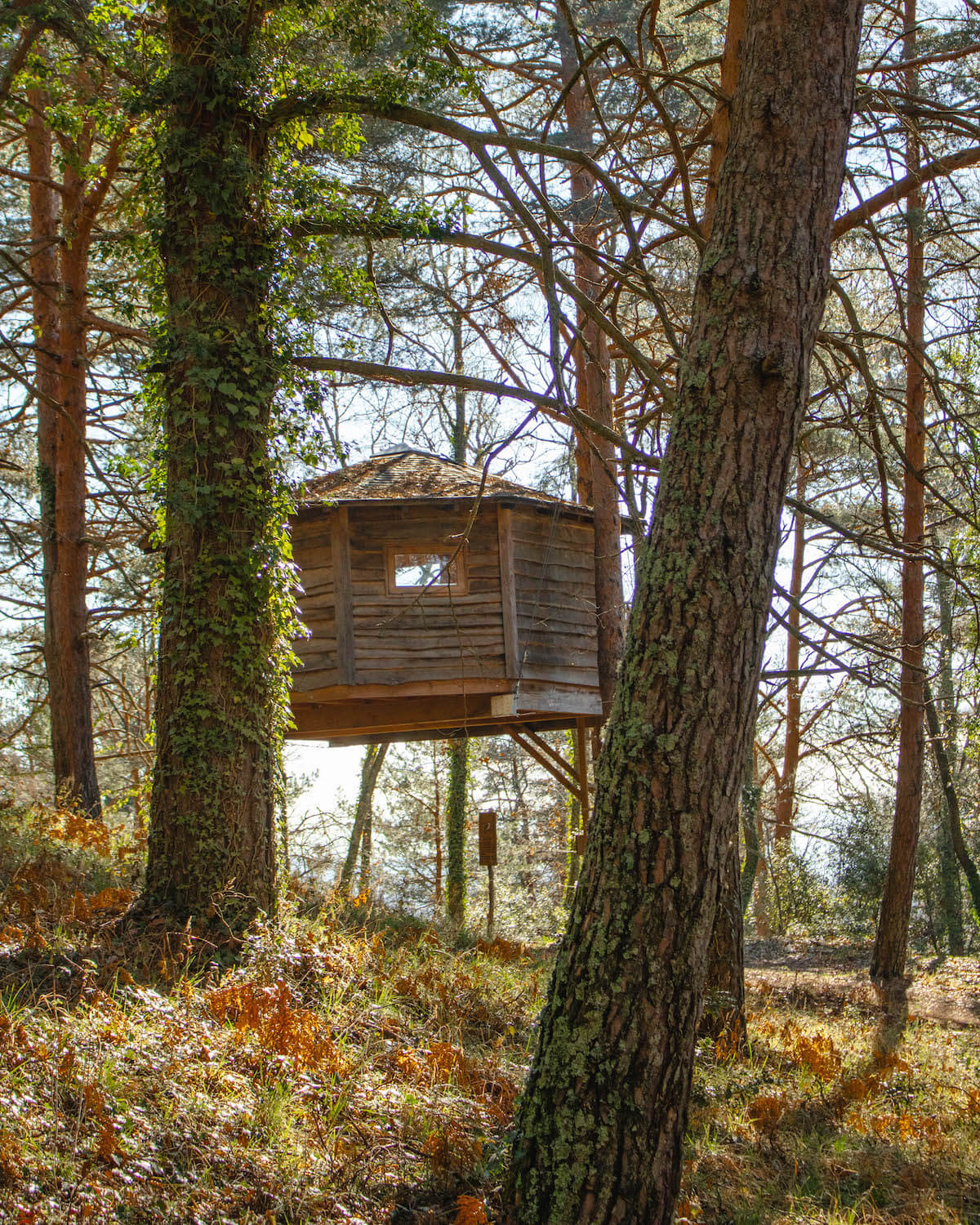 Staying at Cabanes als arbres, treehouse in Catalunya