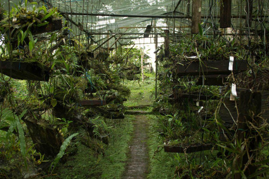Jardim Botánico de Bom Sucesso in São Tomé