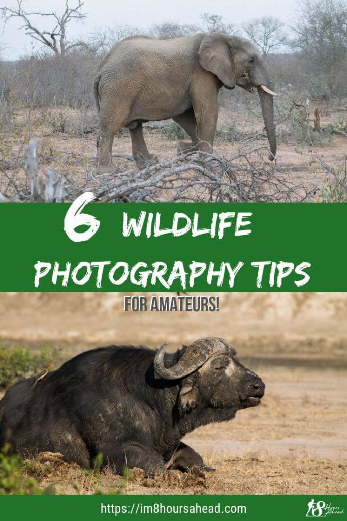 6 wildlife photography tips for amateurs
