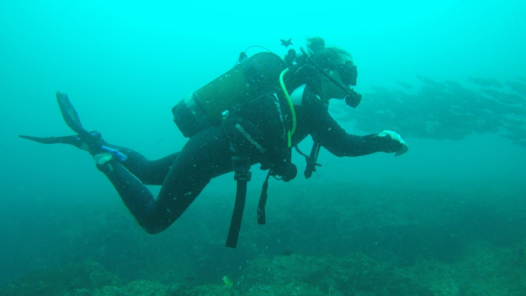 Diving in Tofo, Mozambique