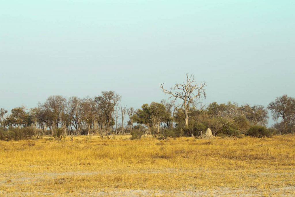 20 pictures to inspire you to travel to the Okavango Delta in Botswana