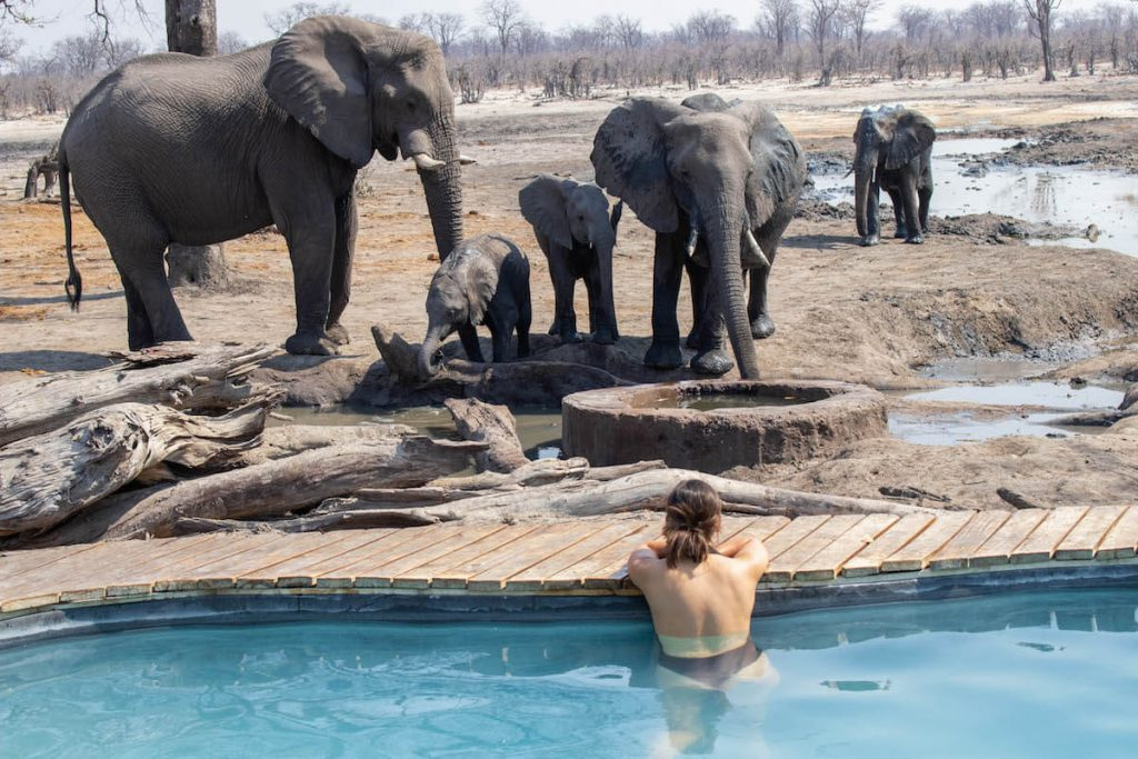 In the pool with elephants very close