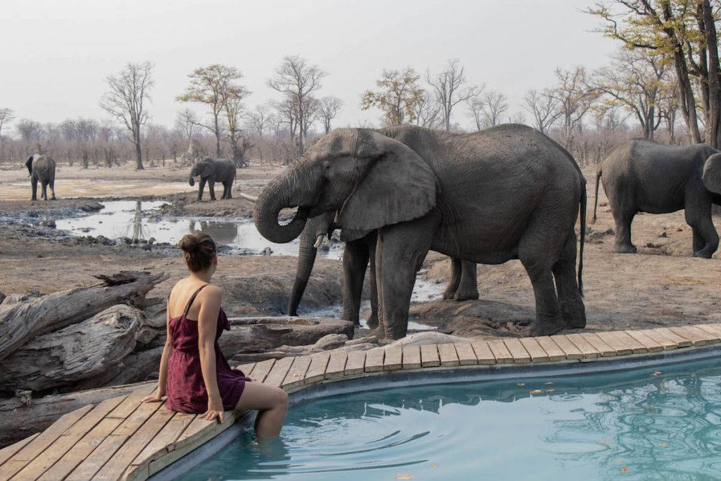 With elephants company in the pool