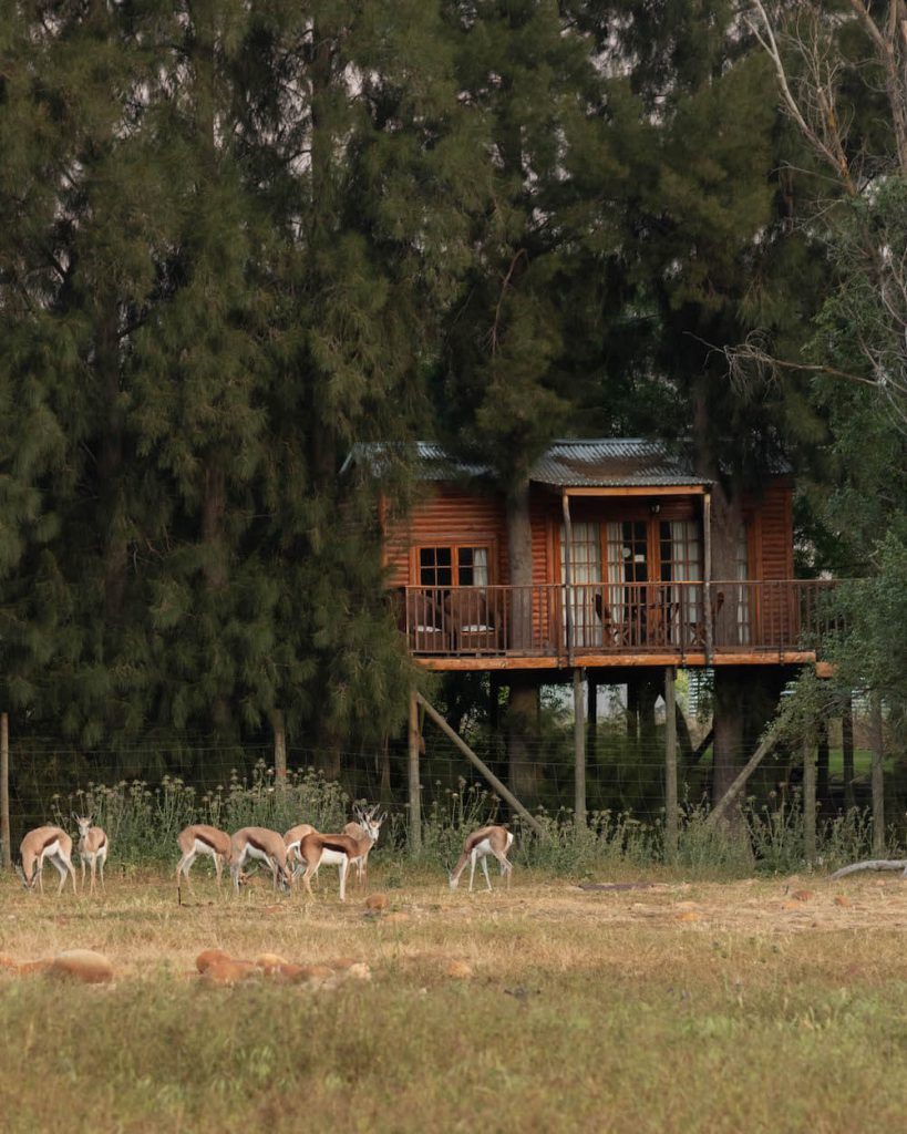 Tree house at Vindoux Guest Farm, South Africa