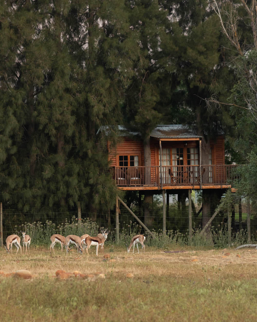 The perfect tree house weekend at Vindoux Guest Farm, South Africa
