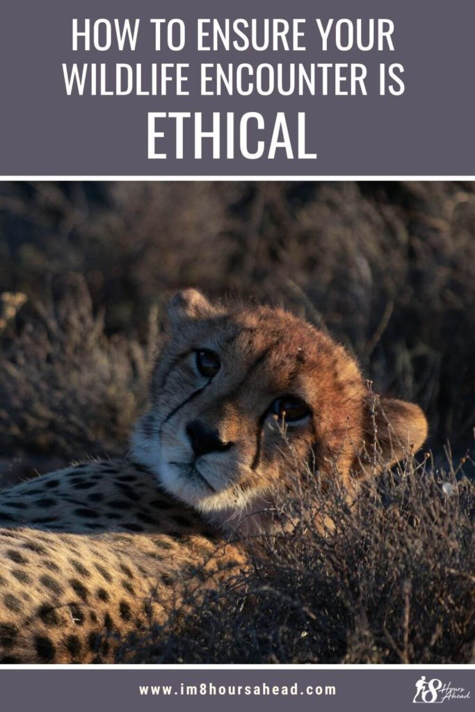 How to ensure your wildlife encounter is ethical