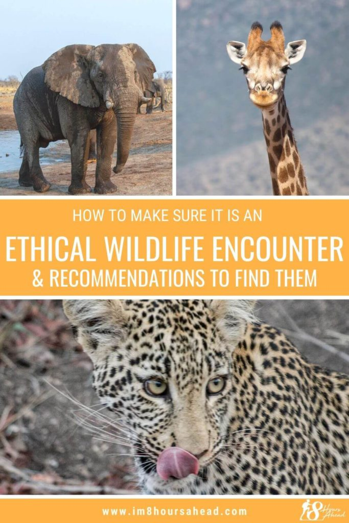 How to make sure it is an ethical wildlife encounter & recommendations to find them