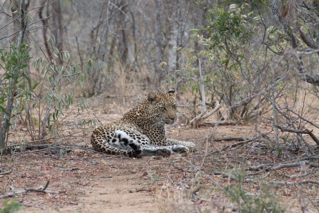 Ethical wildlife encounters: how to find them
