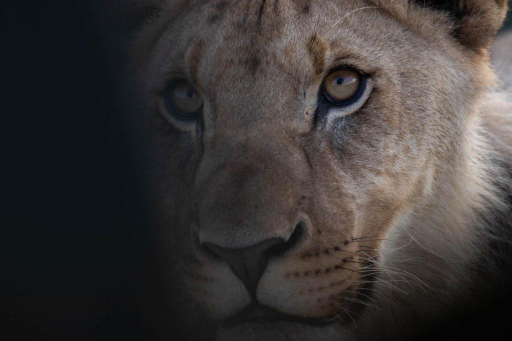 Safari at Samara Game Reserve