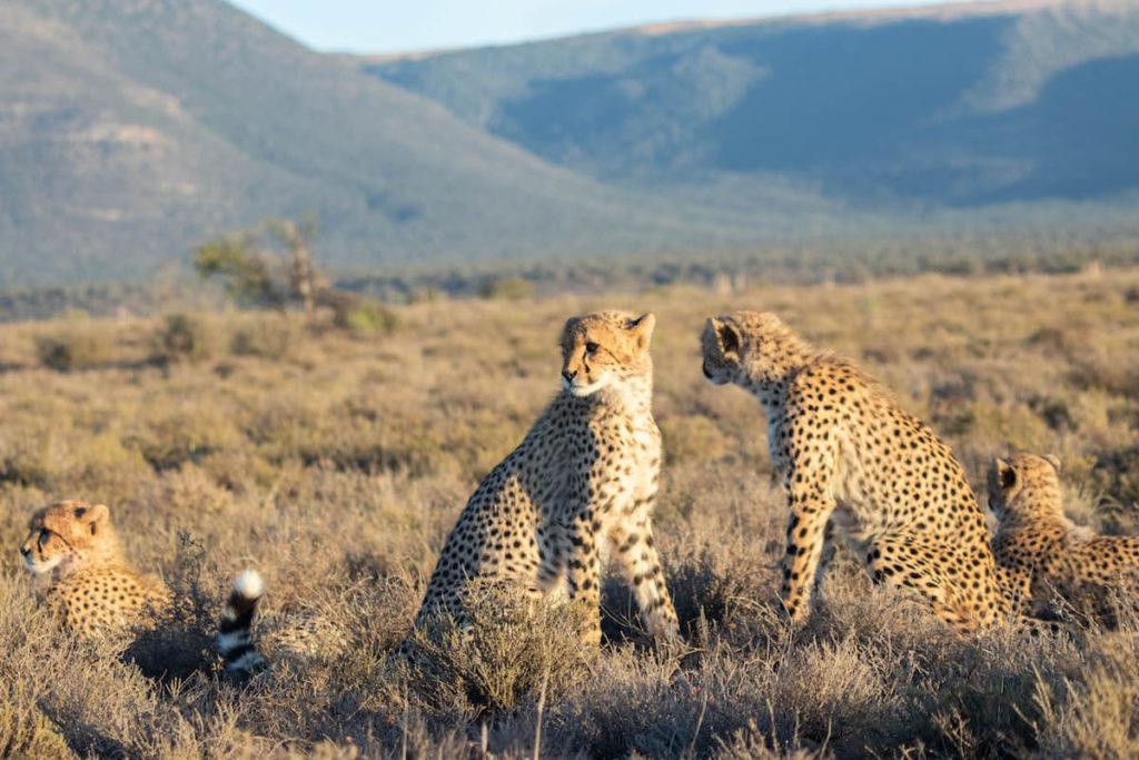 On safari at Samara Game Reserve