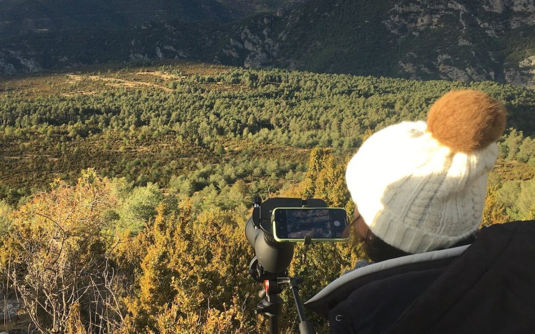 Where to see the deer rut season in Catalunya