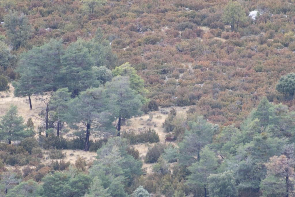 deer rut season in Catalunya