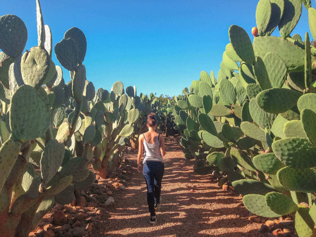 Cacti garden at Babylonstoren